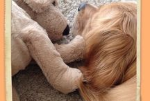 Doggy things / For the love of dogs - pictures, quotes, information  Can you tell I have a Golden Retriever? ;@)