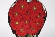 Гербера, цветы и подарки, flowers and gifts, gerbera / гербера, gerbera