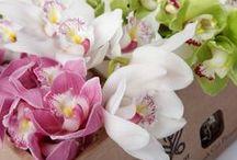 Орхидеи, сimbidium, orchid. / Орхидеи. Цветы тропические. Орхидеи в подарочной коробке. Заказ онлайн. Доставка Москва, Санкт-петербург.