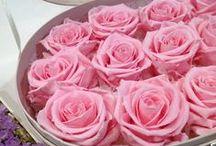 Стабилизированные цветы. / Стабилизированные цветы. Живые цветы обработанные по запатентованной технологии. Сохраняют свою красоту на протяжении многих лет.