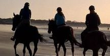 Vind je Buitenrit - Horse back riding beaches