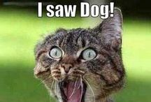 Funny animals / Humor and other funny animals, cats, dogs and other animals, also real animal heroes. Check out my 'Funny' board as well for more humor and fun!! Enjoy animals and love and care for them, you will receive unconditional love.... / by Bibeline designs