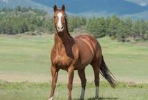 "TCR - Horses / The horses of the ""Triple Creek Ranch"""
