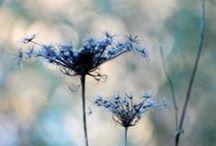 Blue / Inspiroivia sinisiä
