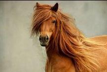 Horsing around / Horses