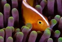 Underwater Photography / Beautiful and stunning shots of underwater photography around the world. Tips to take better pictures underwater. UW.