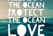 Ocean Conservation / Articles, information and updates about ocean conservation