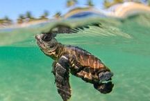 Cute marine animals / Cute marine animals photography from around the world