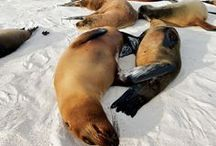 Dive & Travel in the Galapagos, Ecuador / Scuba diving and travel in the most beautiful places in the Galapagos, Ecuador