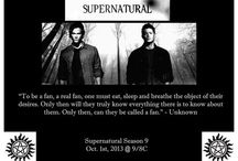 Winchester Boys / Supernatural  / by Sarah Tackett