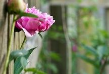 Garden ~ Flowers / Romantic Garden