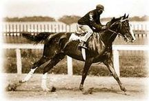Fauna - Horse-(KY Derby 1875-2015) / American Pharoah, California Chrome, Orb, I'll Have Another, Animal Kingdom, Super Saver, Mine That Bird, Big Brown, Street Sense, Barbaro, Giacomo, Smarty Jones, Funny Cide, War Emblem, Monarchos, Fusaichi Pegasus, Charismatic, Real Quiet, Silver Charm, Grindstone, Thunder Gulch, Go for Gin, MORE) / by Jan Irving