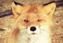 fox  ♥ / only : alive  free happy