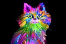 kočky / tapety koček