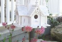 Birds & Birdhouses