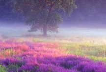 Colors of Nature
