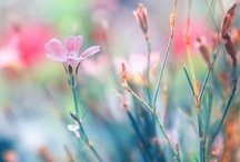 Flowers, colors, inspirations