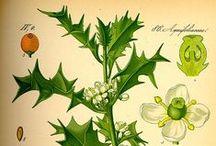 téli növényismereti