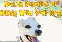 Healthy Dogs / Healthy Dogs
