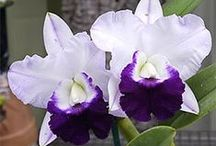 Orchids all over the world / by Karin de Natris