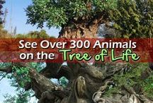 Disney World - Animal Kingdom / Everything you need to know about Disney World Animal Kingdom including attractions, entertainment, restaurants and more.  / by Couponing to Disney