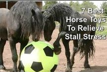 Horse Care and How Tos / Tips to care for the love of your life. Your horse!