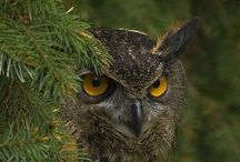 Birds of Prey / Hawks, owls, vultures, and such... Ya know? Like birds that eat meat? ;)