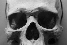 skull/頭蓋骨