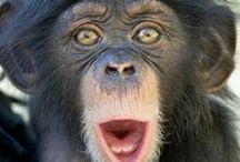 animal_monky