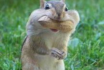 animal_squirrel /リス