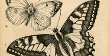 Tattoo: Butterfly, bugs etc