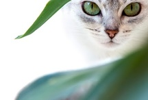 Animals - Cats / by Jan Vafa