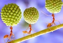 Animals - Bugs / by Jan Vafa