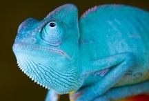 Animals - Reptiles / by Jan Vafa