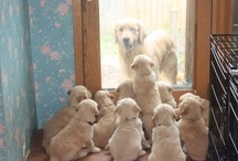 Animals - Dogs & Puppies / by Jan Vafa
