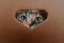 Animals - Cats/Boxes, Bags & Containers / by Jan Vafa