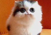 ~ Cute Cats ~ / Beautiful adorable cute cats <3