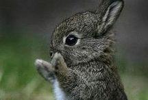Cute Rabbits / ~ Cute little Rabbits ~