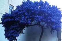 Blue - Sinistä
