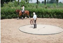 Dressuur / Pferdesport-Horses