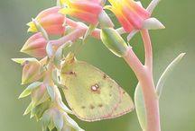 Бабочки / Бабочки