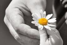 flower power / by emmanuelle roux