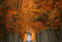 Seizoen - Herfst ☔