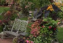 Gardens 2 / by Alby Furlong