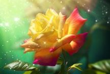 Flowers / by Aundrea Whitlatch-Hiemstra