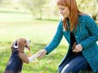 Dog Training / A collection of dog training tips, tricks, and advice.