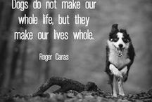 Pet Quotes / A collection of wise words and clever quotes about pets.