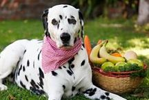 Urates + Low Purine Diets / A collection of links, references, and resources about purine metabolism, urates, and low purine diets for Dalmatians and other purine sensitive pups.