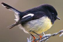 Kiwiana birds bro