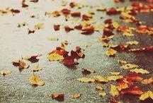 Rain & Autumn